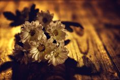 Davide Solurghi Photography - Recent Work - Sunrise on small daises | Thank you so much for the visits, favs and comments :)  ©Davide Solurghi All Rights Reserved #stilllife #indoor #inside #studio #Flowers #wood #table #Sunrise #wooden #furniture #earthenware #nature_morte #natura_morta #daises #fiori