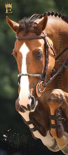 Show Jumper | Equinus International Magazine http://www.equinusinternational.com/default_v3.aspx