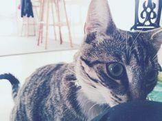Little Maggie inspecting her pet sitter. #kitten #kittensofinstagram #catstagram #catsofinstagram #petstagram #cutepets #nowyoushallpass #suzspetservices - http://ift.tt/1HQJd81
