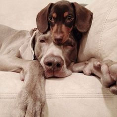 best-friends-dogs-harlow-sage-indiana-34