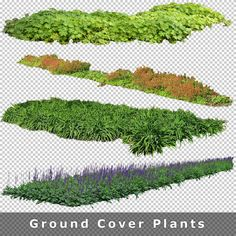 Cutout Plants - Cutout Vegetation for Architecture Renderings Additional 80 hi-res cutout entourage for your architecture graphic . Tree Photoshop, Photoshop Images, Landscape Sketch, Landscape Architecture Design, Photoshop Rendering, Photoshop Elements, Photoshop Essentials, Tree Plan, Ground Cover Plants