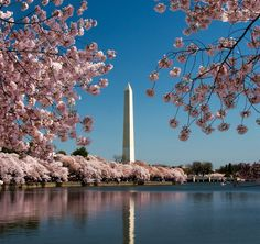Washington Monument in DC during the Cherry Blossom festival was an amazing sight to see.  So beautiful.