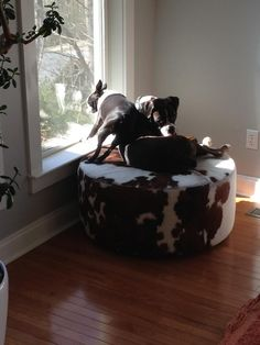 Moe and Mac fight for their spot in the sun!