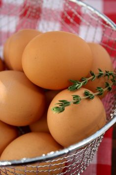 Do you eat eggs? If so, what kind: white, brown, free-range, organic, farm fresh, pastured? Did you know the difference between the different types of eggs and why some may be better than others?