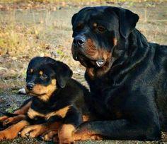 Pai e filho <3