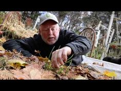 In the Garden: Preparing fig tree for winter, planting tulips with garli...