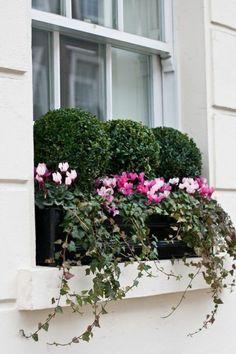 jolie fenetre bien decorer avec des fleurs