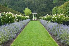 At Longwood Gardens, in Kennett Square, Pennsylvania, a wide mown path is planted with matching rows of Caryopteris 'Longwood Blue' and Hydrangea paniculata, creating a dramatic and seasonally changing allée that leads the visitor to a formal pagoda.