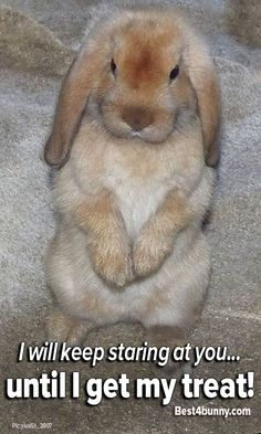 Bunnies know just what to do... to get what they want! http://best4bunny.com/