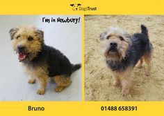 Bruno at Dogs Trust Newbury loves to go for walks and laying out in the garden chilling out.