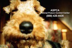 Animal Poison Control Center (888) 426-4435