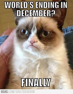 Funny pictures about Meet Grumpy Cat. Oh, and cool pics about Meet Grumpy Cat. Also, Meet Grumpy Cat. Grumpy Cat Quotes, Meme Grumpy Cat, Angry Cat Memes, Cat Jokes, Angry Cat No, Funny Shit, Funny Cats, Funny Animals, Funny Memes