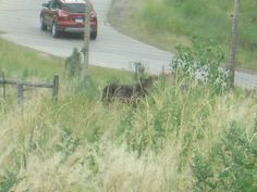 Timber wolf - Bear Country USA - Rapid City, South Dakota.