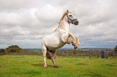 Retraining the delinquent horse | Pets4Homes