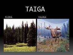 Estepa clima flora y fauna yahoo dating