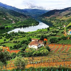Douro Valley, Portugal. To learn more about #Porto click here: http://www.greatwinecapitals.com/capitals/porto