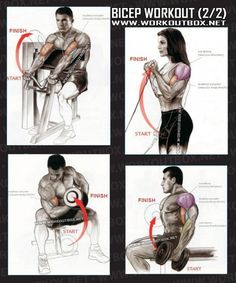Biceps 2/2