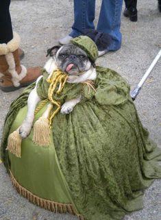 dog in costume. hahahaha!