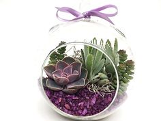 Succulent Terrarium Kit Pretty in PurpleDIY by SucculentsAndMore1