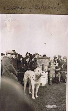 UK Ch Cloghran of Ouborough (1929) Sire: Chulainn Connacht       Dam: Iduna of Hindhead