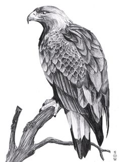 Golden Eagle by Glaiceana.deviantart.com on @DeviantArt