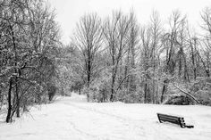 Where is Spring? Canada North, Ottawa Canada, North America, Black And White, Spring, Outdoor, Black White, Outdoors, Blanco Y Negro