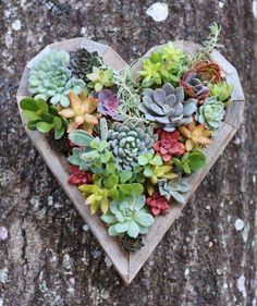succulents in wooden heart planter