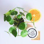 Savon Sea Salt Kopa Kauai - un vrai bonheur pour la peau Sea Salt, Cactus, Skin Care, Fruit, Instagram, Hawaii, Soap, Bonheur, Green
