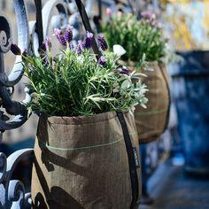 «Je ne suis qu'amour...  mon balcon, mes bacsac,  la lavande... #instabalcon #bacsac #flower #paris #urbangarden»