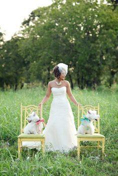 westhighland white terrier wedding - Google Search