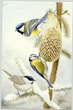 http://birds.nu/kort/su-mesar.jpg