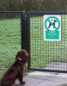 Boundary training is a great way to keep your dog in its yard without the use of electric fencing or even an actual fence.