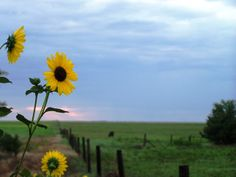 To Greet the Sun; Brownell, KS;LIKE, COMMENT, OR SHARE TO VOTE!