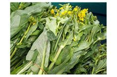 Green Leaf Vegetable with Yellow Flowers - Check out the free plant identification mobile app at GardenAnswers.com