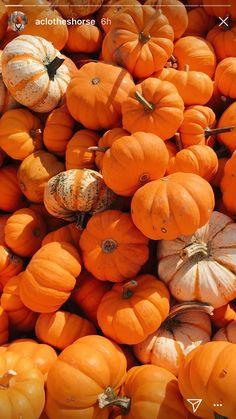Fall Fruits, Pumpkin, Vegetables, Cooking, Food, Kitchen, Pumpkins, Essen, Vegetable Recipes