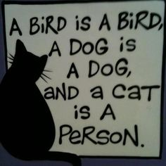 cat is a person sign art - Cat memes - kitty cat humor funny joke gato chat captions feline laugh Crazy Cat Lady, Crazy Cats, I Love Cats, Cool Cats, Catsu The Cat, Funny Cats, Funny Animals, Cat Quotes, Cat Sayings