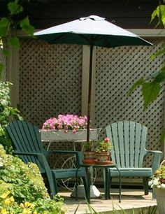 Privacy Planting Outdoor Ideas Pinterest Pictures Plants And Evergreen