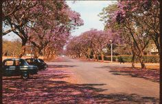 old photographs of Salisbury, Rhodesia - Google Search