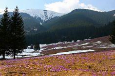 Dolina Chochołowska - Tatry wiosną