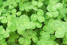 Irish songs for St. Patricks Day Fun Here's a playlist of great Irish(ish) songs to help you get your green on this St. Patrick's Day! http://www.vibeshifting.com/irish-songs-weekend-playlist/ #stpatricksday #irish #music