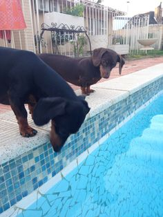 Oooo what's in the pool