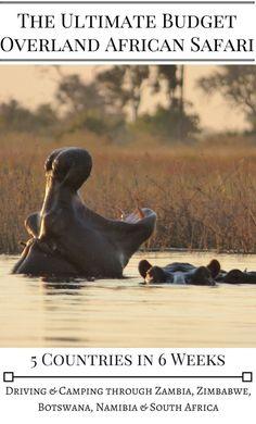 Die 148 Besten Bilder Von Safari In Africa Walking Safari Afrika
