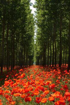 Red forest by Ágnes Mezősi