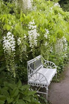 Wisteria and a beautiful garden bench