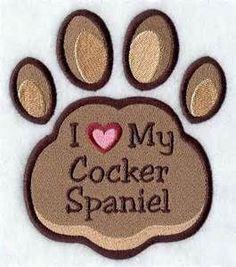 #cocker #spaniel