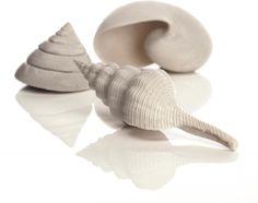 Decoratie Schelpen - Seasells - Wit - Biorb