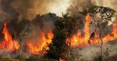 A Amazónia está a arder. Sete perguntas e respostas sobre uma catástrofe ambiental Brazil Rainforest, Amazon Rainforest, Ecuador, National Geographic, Natural Resources, Global Warming, Mother Earth, Lunges, Climate Change