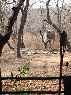 Picture perfect! Marloth Park, The Good Place, Moose Art, Horses, Places, Pictures, Animals, Photos, Animales