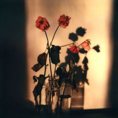 Walker Evans, Floral Still-Life, 1973-74, Polaroid SX-70, color print
