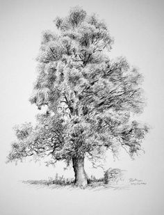 Merthyr Vale, Merthyr, Wales; Tree Drawing original carbon pencil drawing on heavy weight white cartridge paper. Gift idea. approx A3 size
